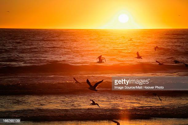 Birds flying over beach at sunset