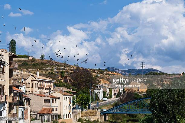 Birds flying over bride and houses