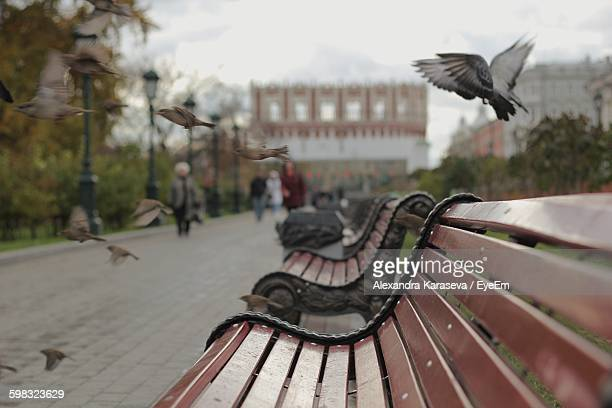 Birds Flying Over Empty Bench On Street
