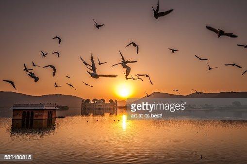 Birds flying over Jai Mahal at sunrise