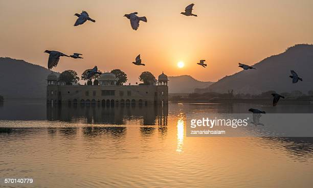Birds flying over Jal Mahal Palace at sunrise, Jaipur, Rajasthan, India