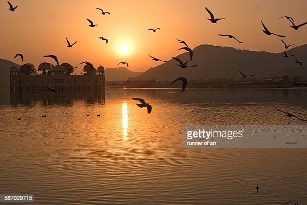 Birds flying over Jal Mahal Palace during sunrise