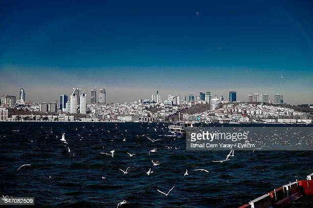 Birds Flying Over River In Front Of Cityscape Against Clear Blue Sky