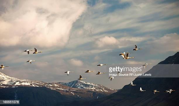 Birds flying over rural landscape