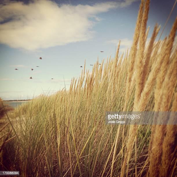 Birds flying past coastal grass on the seashore