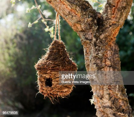 Birds home on cork oak : Stock Photo