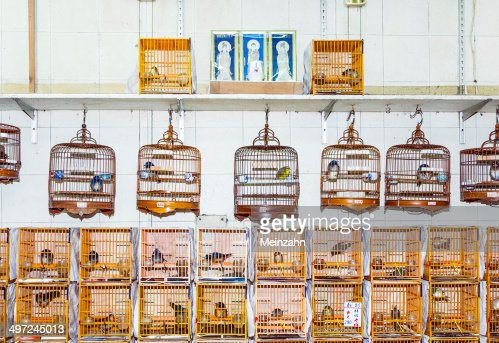 birds in a cage at the birds market in Hongkong : Stock Photo