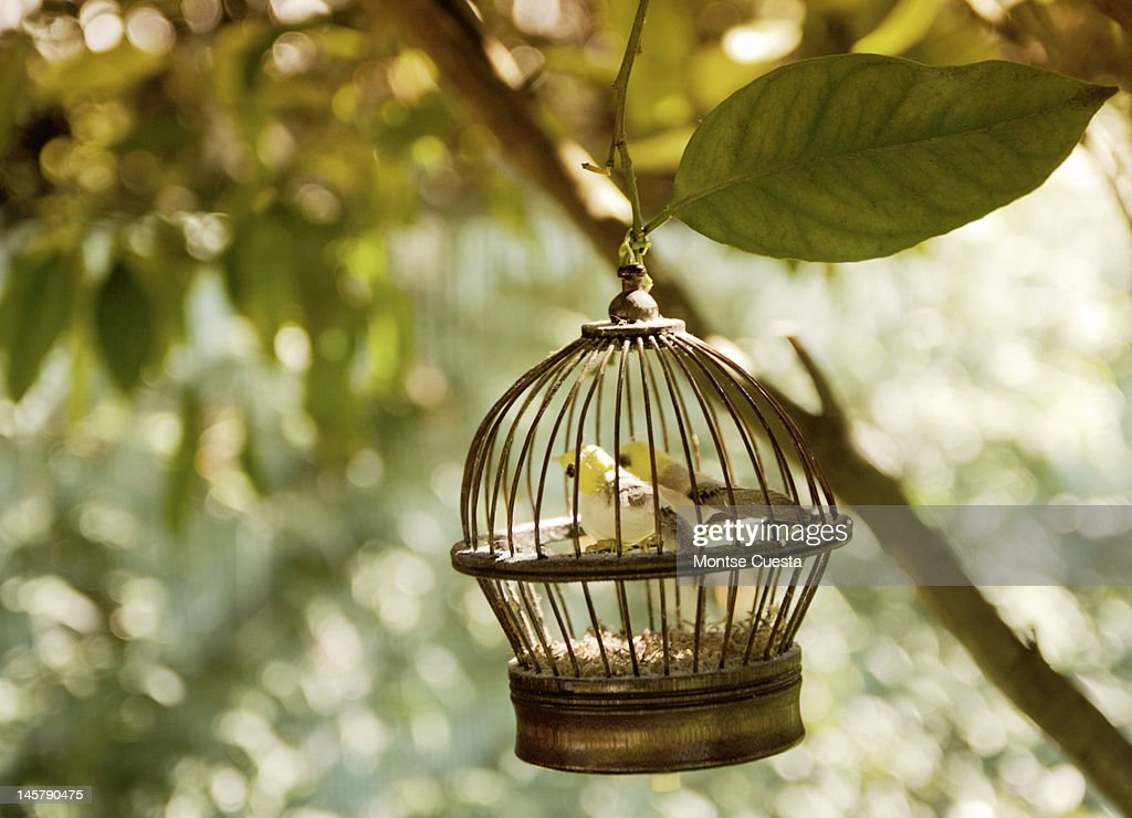 Birds in cage : Stock Photo