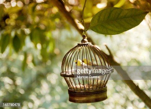 Birds in cage : Stock Photo