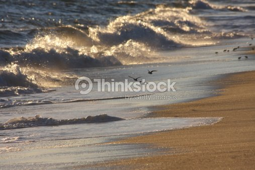 birds in flight on Nantucket beach : Stock Photo