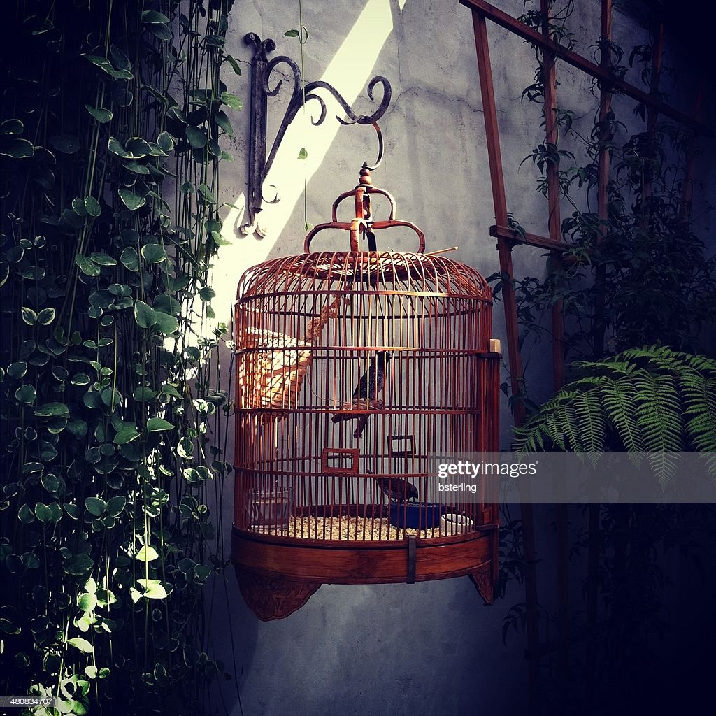 Birds in ornate cage hanging on wall outdoors