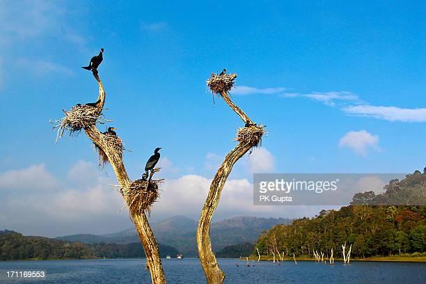 Birds in their nests