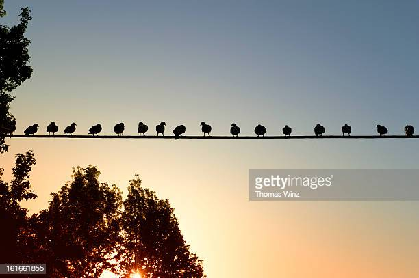 Birds lined up on a wire
