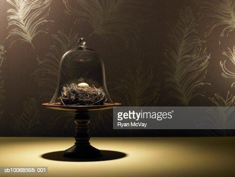 Birds nest and quail egg under glass jar|