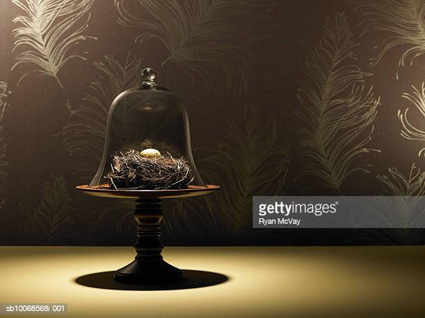 Birds nest and quail egg under glass jar|