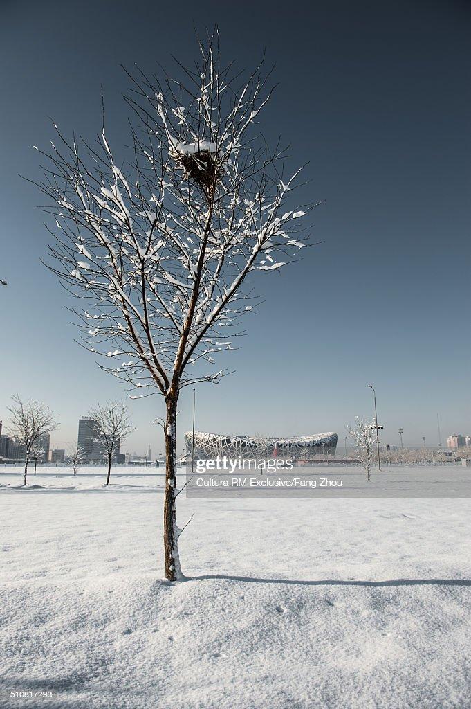 Bird's nest in bare tree with distant view of Beijing National Stadium (birds nest), Beijing, China