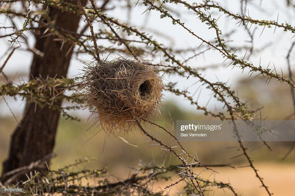 Birds Nest, Samburu Kenya