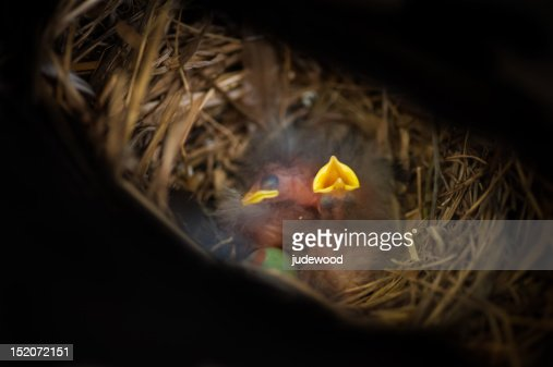 Birds newly hatched : Foto stock