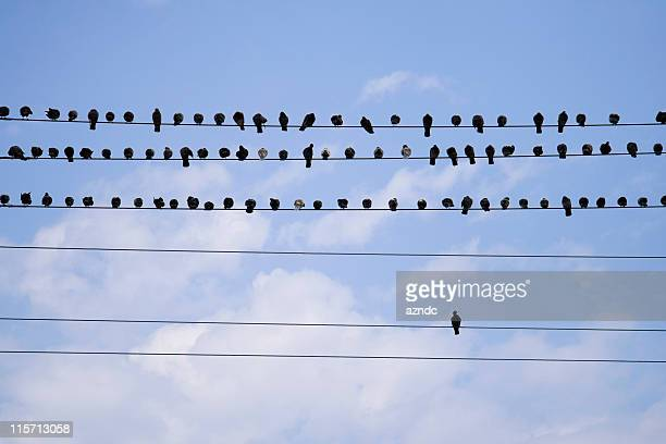 Birds On A Telephone Line