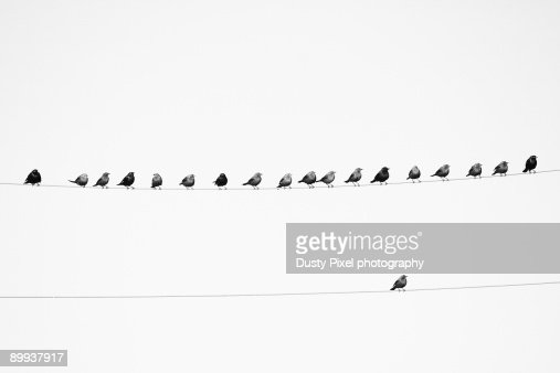Birds on a wire and one all alone