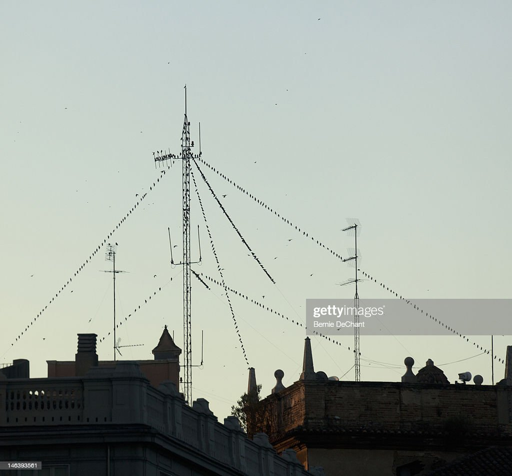 Birds on antenna wires at dusk, Valencia, Spain : Stock Photo