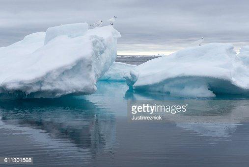 Birds on Pack Ice Arctic Ocean
