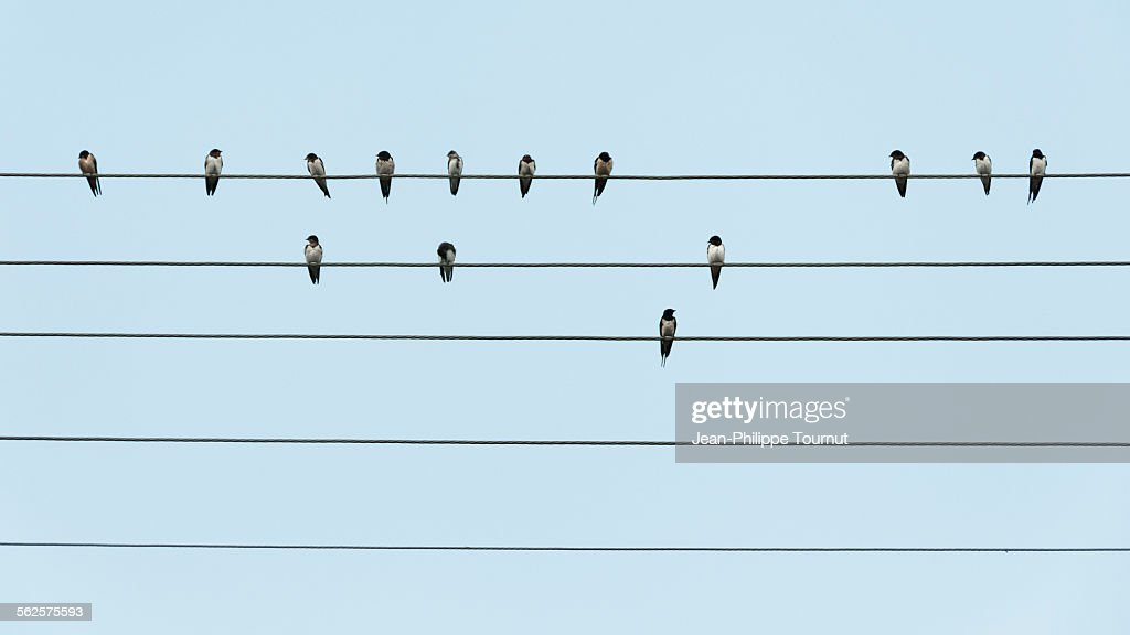 Birds on parallel wires