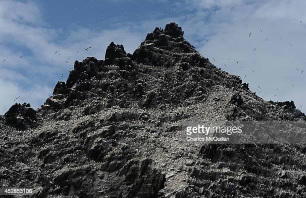 Birds on Skellig Michael island as Star Wars Episode VII directed by JJ Abrams begins filming July 28 2014 in Skellig island Ireland