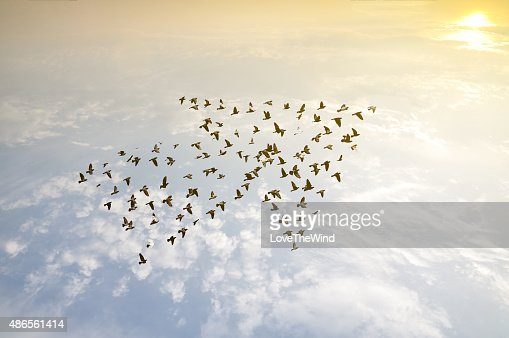 Birds on sky , growth development concept : Stock Photo