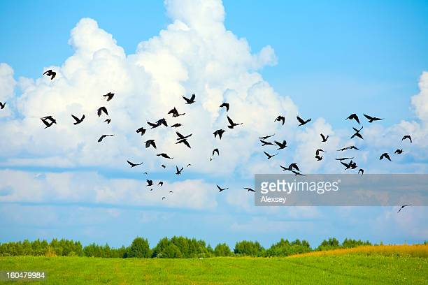 Birds on sky