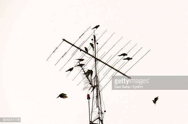 Birds On Television Aerial Against Clear Sky