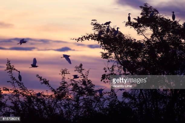 Birds Over Tapajos River