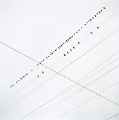 Birds perched on telephone wires, low angle view