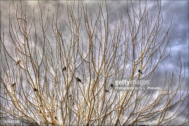 Birds perching on tree