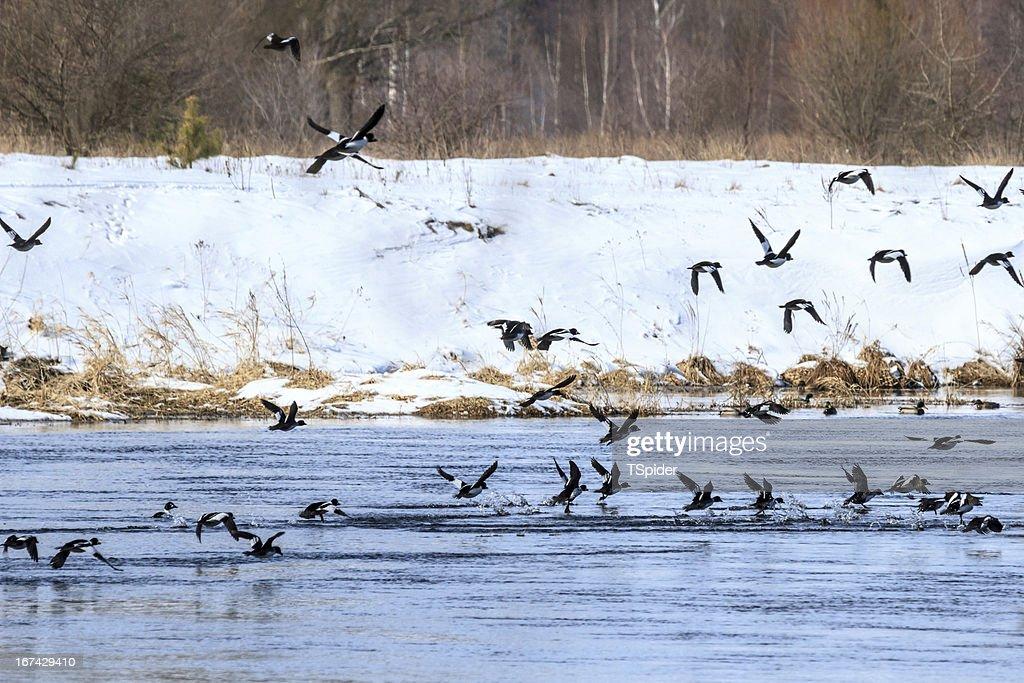 Pájaros : Foto de stock
