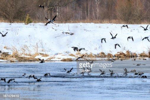Aves de : Foto de stock