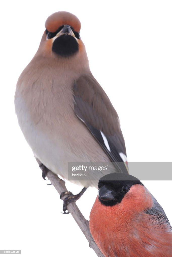 Vögel : Stock-Foto
