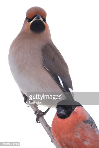 birds : Stock Photo