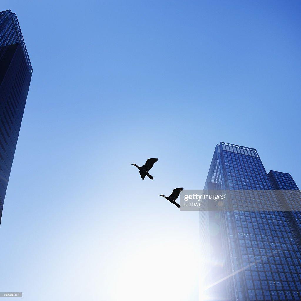 Birds. : Stock Photo