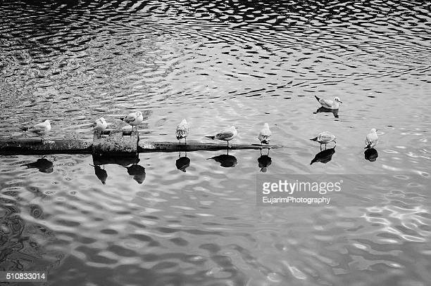Birds reflection in water in black and white