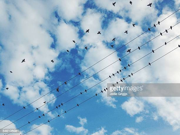 Birds resting on and flying over wire cables