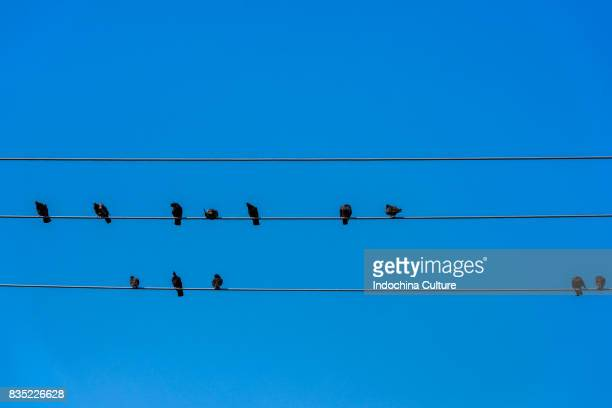 Birds resting on wire