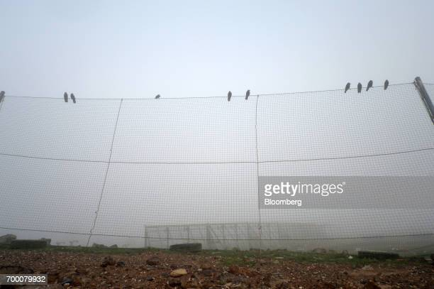 Birds sit atop a fence designed to trap rubbish that is picked up by wind in a landfill cell at the Melbourne Regional Landfill site operated by...