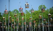 Birds sit in cages hanging from poles during a birdsinging contest in the Rueso district of Thailand's southern province of Narathiwat on March 22...