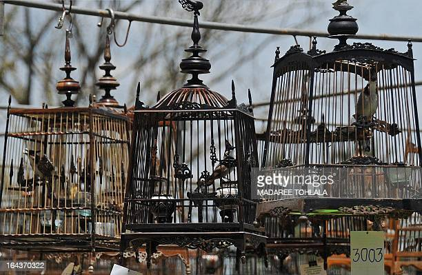 Birds sit in cages hung up during a birdsinging contest in the southern Thai province of Narathiwat on March 23 2013 Thousands of bird owners took...