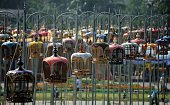 Birds sit in their cages during a birdsinging contest in Thailand's southern province of Narathiwat on September 20 2015 Over one thousand birds from...