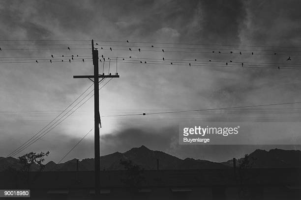 Birds sit on power lines above buildings mountains and setting sun in the background Ansel Easton Adams was an American photographer best known for...