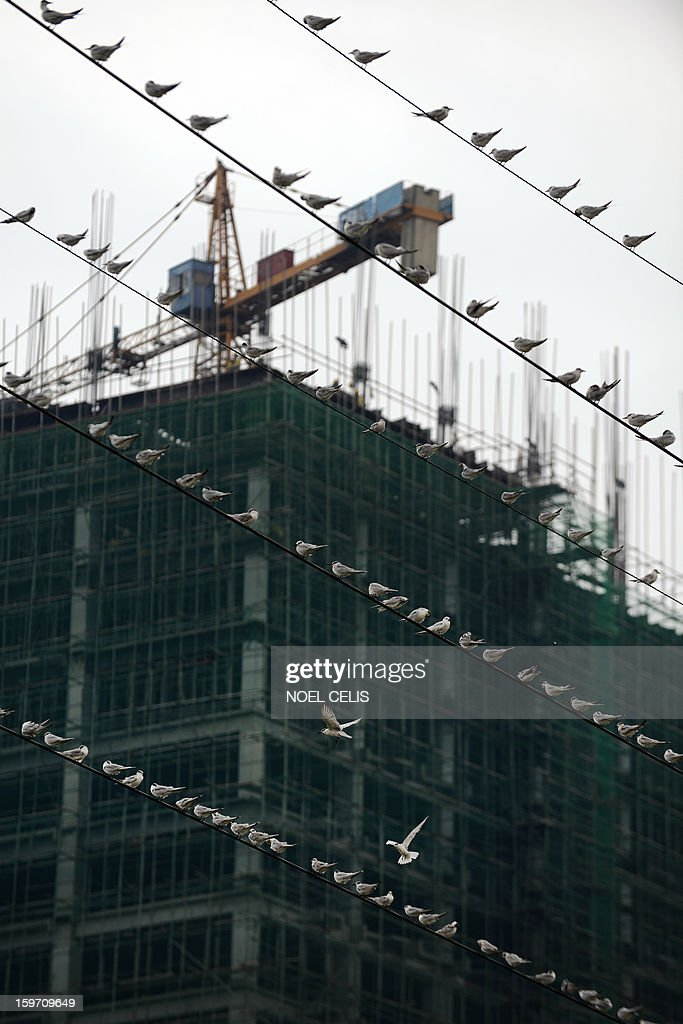 Birds sit perched on electrical wires in front of a construction project near the Pasig River in Manila on January 19, 2013.