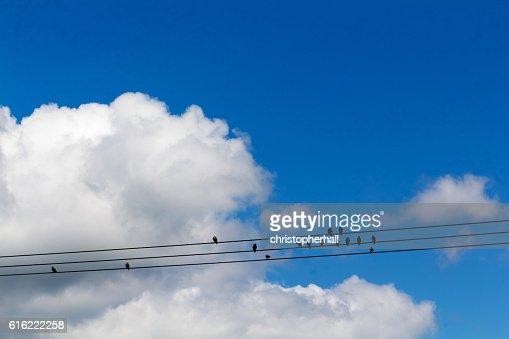 Birds sitting on wires against a blue sky : Stockfoto
