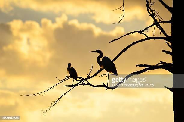 Birds sunset Brazil